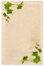 Old paper sheet with vine leaves ornament isolated Royalty Free Stock Photo