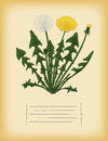 Old paper template with dandelion flower vector for notebook Stock Photography