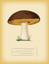 Old paper template with mushroom boletus edulis in summer Stock Images