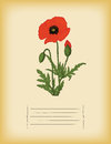 Old paper template with red poppy flower Stock Photography