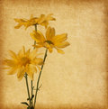 Old paper texture with flowers yellow Stock Images