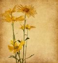 Old paper  with yellow flowers Royalty Free Stock Photo