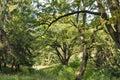 Old park close to Schonborn Castle. Chynadiyovo, Ukraine. Royalty Free Stock Photo