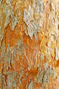 Old pine tree limb with no bark and deep texture Stock Photo