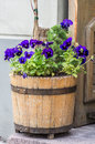 The Old Pot With Flowers