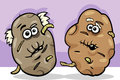 Old potatoes potatoes cartoon illustration of funny comic or senior vegetable food characters Royalty Free Stock Images
