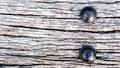 Old railroad ties with Large nail texture Royalty Free Stock Photo