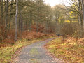 Old railway track now walkway wyre forest worcestershire november Royalty Free Stock Photo