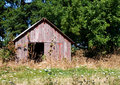 Old Red Shed in Trees and Weeds Stock Photography