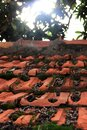 Old red shingles tiles with moss Royalty Free Stock Photo