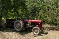 Old red tractor in cherry orchard Stock Photos