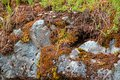Old rock overgrown with green vegetation and red moss is close Royalty Free Stock Photo