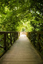 Old romantic bridge into the forest Royalty Free Stock Photography