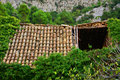 Old roof house and devasted growth with bush and trees Royalty Free Stock Photos