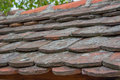 Old roof tiles covered with algae fungus lichens and moss Royalty Free Stock Images