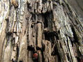 Old rotten wood Royalty Free Stock Photo