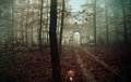 Old ruin in the forest,fantasy photo