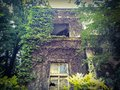 Old ruined ghost house with ivy plants and trees Stock Images