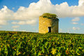 Old ruined medieval tower in vineyard in Medoc Royalty Free Stock Images
