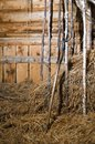 Old rustic barn and a pitchfork Royalty Free Stock Photo