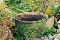 Old rusty bucket full of water in the garden Royalty Free Stock Photo