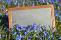 Old school board in a meadow of squill antique blossoms Royalty Free Stock Images