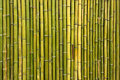 Old scratched green yellow bamboo fence background Royalty Free Stock Photo