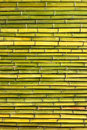 Old scratched green yellow bamboo fence horizontal background Royalty Free Stock Photo