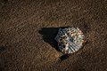 Old sea shell sitting in the sand Royalty Free Stock Photos
