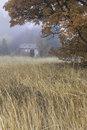 Old shed behind tree an in a field a during autumn south of spokane washington Stock Photo