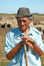 Old shepherd with grazing sheep leaning on his stick Stock Photography