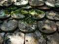 Old sherd cold shadowed under moss on sunny day Royalty Free Stock Photos