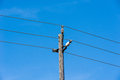 Old simple rural wood electrical pole on blue sky Royalty Free Stock Photo