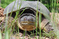 Old snapping turtle Royalty Free Stock Photo