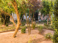 Old spanish garden in courtyard in late afternoon sun warm sunlight an traditional with orange trees and well Stock Photography