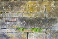 Old stacked stone wall with ferns block growing through cracks Stock Photography