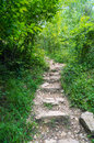 Old stairs in forest Royalty Free Stock Photo
