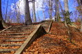 Old Stairs in the forest Royalty Free Stock Photo