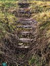 Old stairs in grass mystic scenaries Royalty Free Stock Images