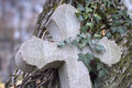 Old stone cross overgrown with ivy and moss concrete leaning against the tree which bark is it is a symbol of burial place grave Royalty Free Stock Photo