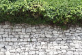 Old stone fence and a hedge of wild grape close-up Royalty Free Stock Photo