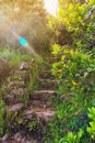 Abandoned stairs in the woods in a sunny day Royalty Free Stock Photo