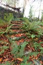 Old stone steps, covered with autumn leaves. Autumn in Wicklow, Ireland Royalty Free Stock Photo