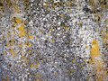 Old stone surface with mushroom and mold deposition Royalty Free Stock Photo