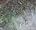 Old stone wall with moss and mold Royalty Free Stock Photo