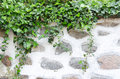 Old stone wall, plaster and green ivy Royalty Free Stock Photo