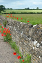 Old stone wall with poppies Stock Images