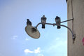 Old street lamp pigeons on an over a blue sky Royalty Free Stock Images