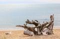 Old stumps interesting on beaches Royalty Free Stock Photos