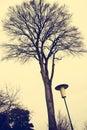 Old style street lantern Royalty Free Stock Photo